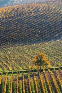 Agriturismo Albarossa, Vidiecke domy  Nizza Monferrato - big - 56