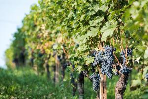Agriturismo Albarossa, Case di campagna  Nizza Monferrato - big - 63