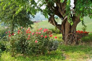 Agriturismo Albarossa, Vidiecke domy  Nizza Monferrato - big - 32