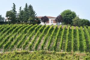 Agriturismo Albarossa, Vidiecke domy  Nizza Monferrato - big - 13