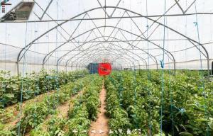 Farm stay Orlov put, Farmházak  Bellye - big - 14