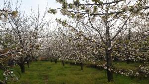 Agriturismo Dolcetna, Hétvégi házak  Sant'Alfio - big - 50