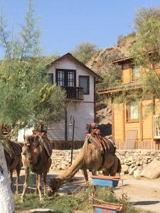 Отель Ilgınlar plaj-kamping, Ортакент