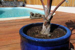 Leu Bleu Austral, Penzióny  Saint-Leu - big - 35