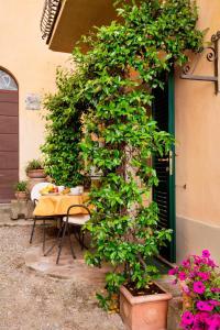 Appartamenti Belvedere, Ferienwohnungen  Cortona - big - 84