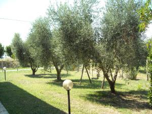La Palma, Bauernhöfe  Magliano in Toscana - big - 28
