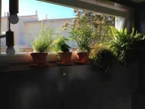 Vivenda Brito, Гостевые дома  Карвуэйру - big - 41