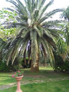 La Palma, Bauernhöfe  Magliano in Toscana - big - 1