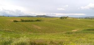 La Palma, Bauernhöfe  Magliano in Toscana - big - 14