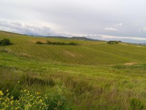 La Palma, Bauernhöfe  Magliano in Toscana - big - 33
