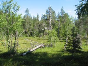 Ollilan Lomamajat, Nyaralók  Kuusamo - big - 141