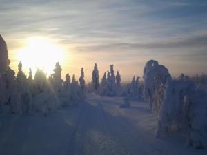 Ollilan Lomamajat, Holiday homes  Kuusamo - big - 176