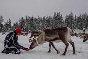 Ollilan Lomamajat, Nyaralók  Kuusamo - big - 151