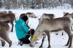 Ollilan Lomamajat, Holiday homes  Kuusamo - big - 200