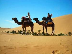 Camel Bivouac Merzouga, Campeggi di lusso  Merzouga - big - 45