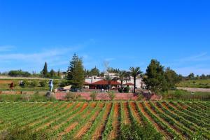 Quinta dos Vales Wine & Art Estômbar