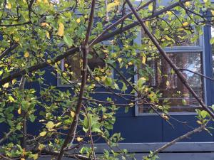 Siesta Cottage, Appartamenti  Lorne - big - 3