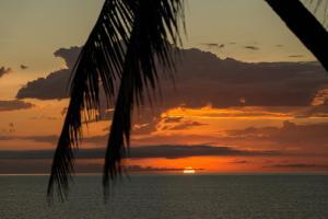 Thala Beach Nature Reserve, Port Douglas (19 of 81)