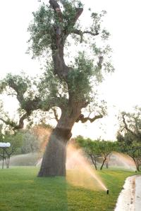Masseria Asciano, Farm stays  Ostuni - big - 120