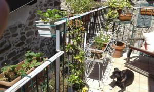 Casa Med Holiday Home, Case vacanze  Isolabona - big - 38
