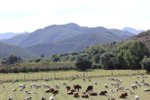 Montana Guest Farm, Bed & Breakfasts  Oudtshoorn - big - 67