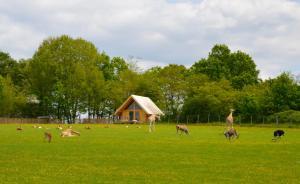Les Lodges Du Reynou