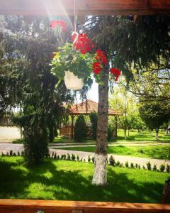 Casa Cu Nuc, Penzióny  Brebeni - big - 29