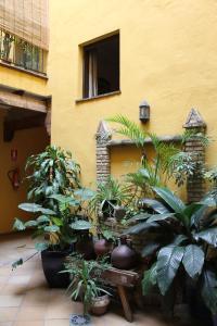 Hostal Lojo, Penziony  Conil de la Frontera - big - 11