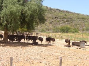 Montana Guest Farm, Bed & Breakfasts  Oudtshoorn - big - 55