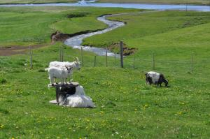 Stóra-Ásgeirsá Farm Stay.  Foto 9