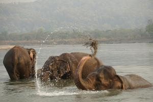 Tiger Tops Tharu Lodge (23 of 44)