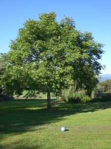 Gasthof zum Sonnenwald, Penziony  Schöfweg - big - 34