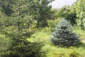 Bio Yard, Penzióny  Lagodekhi - big - 75