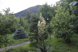 Bio Yard, Penzióny  Lagodekhi - big - 58