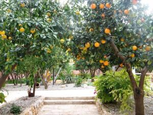 Masseria Asciano, Farm stays  Ostuni - big - 72