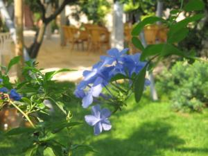 Masseria Asciano, Farm stays  Ostuni - big - 69