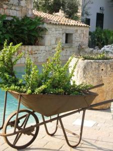 Masseria Asciano, Farm stays  Ostuni - big - 53