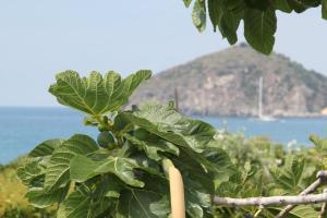 Hotel Maronti, Hotely  Ischia - big - 36