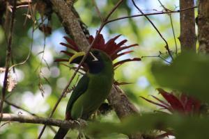 Talamanca Reserve, Hotely  Rivas - big - 54