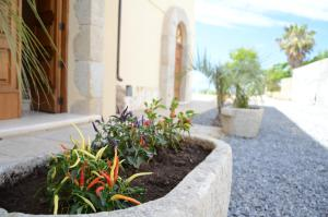 Villa D'Aquino, Bed & Breakfasts  Tropea - big - 40