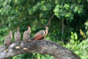 Posada Amazonas (31 of 61)