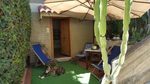 La Casa Delle Vacanze Acitrezza, Apartmány  Aci Castello - big - 5