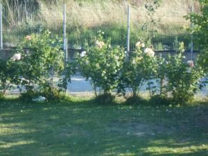 Villa Levanda, Prázdninové domy  Lefkada Town - big - 16