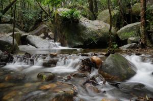 Daintree Cascades