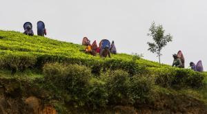Hill Rise by Edwards Collection, Villas  Nuwara Eliya - big - 14