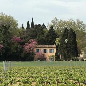 Château Pech-Celeyran, Case vacanze  Salles-d'Aude - big - 33