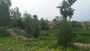 Sun Senlin Farm Stay, Kúriák  Jencsing - big - 14