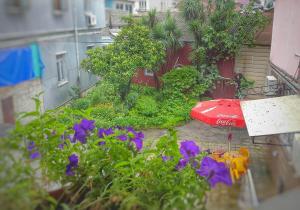 Eka Guest House, Hostely  Batumi - big - 7