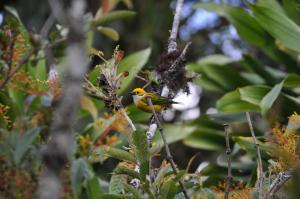 Talamanca Reserve, Hotely  Rivas - big - 44