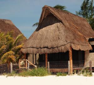 Rhincodon Typus, Hotels  Holbox Island - big - 9